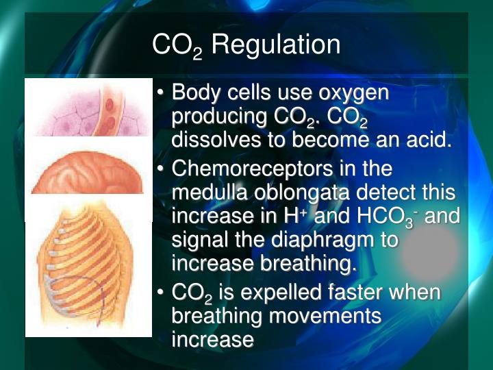Co 2 regulation