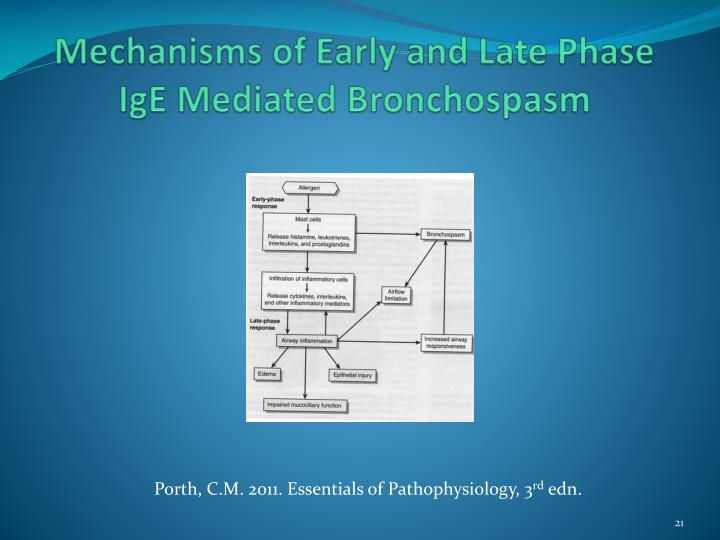 Mechanisms of Early and Late Phase IgE Mediated Bronchospasm