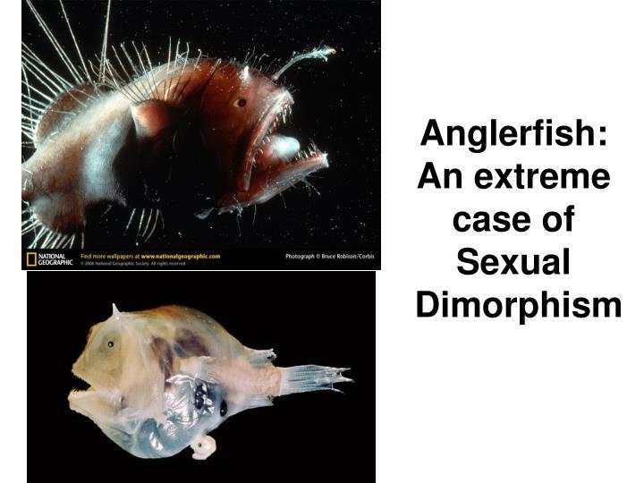 Anglerfish: