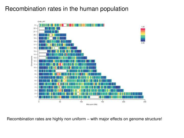 Recombination rates in the human population