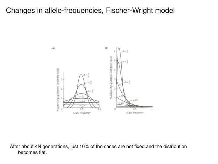 Changes in allele-frequencies, Fischer-Wright model