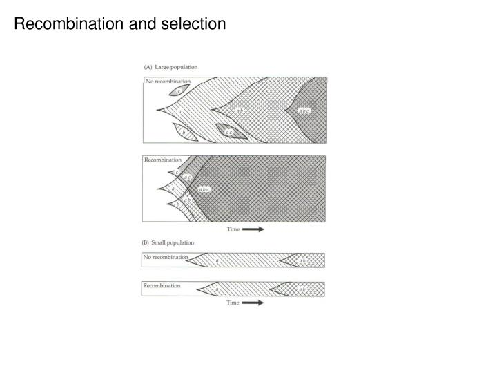 Recombination and selection