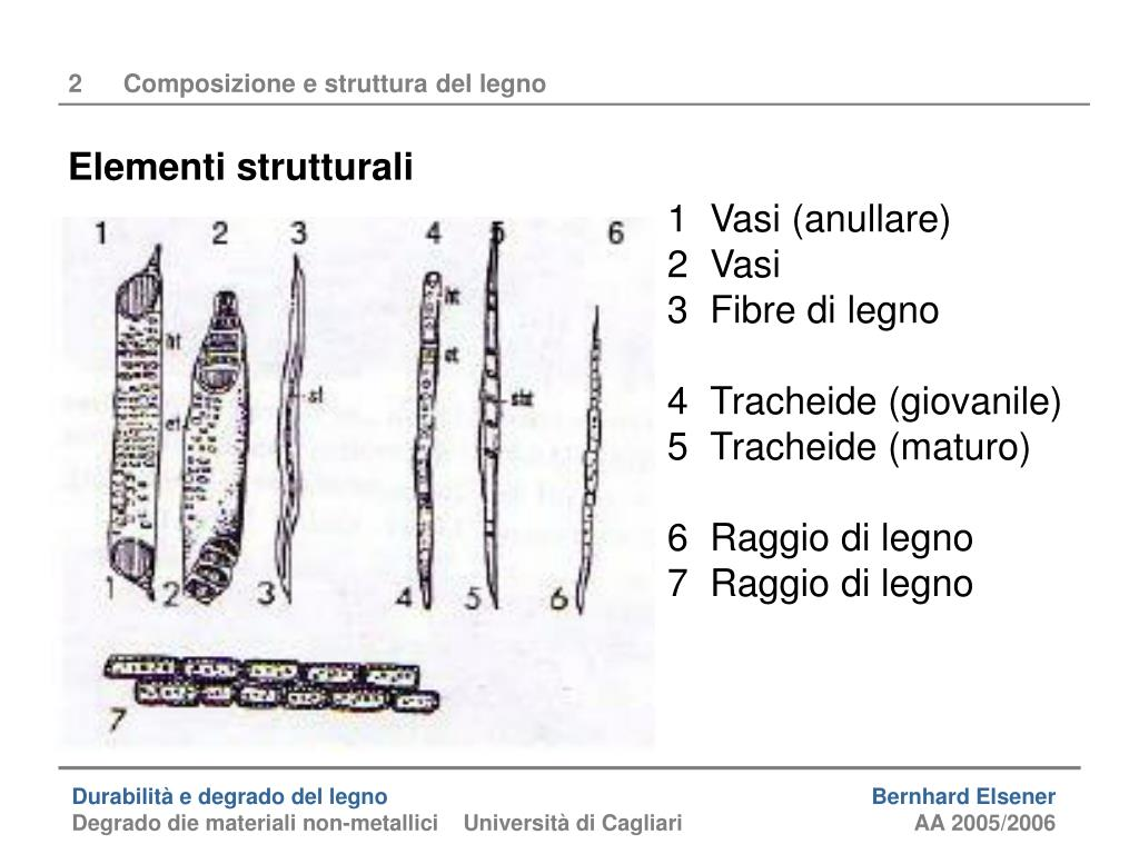 Le Fibre Del Legno ppt - durabilità e degrado del legno powerpoint presentation