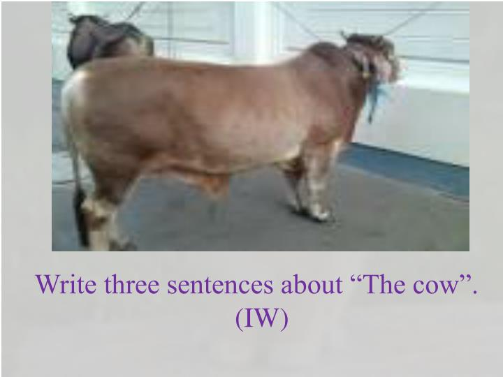 """Write three sentences about """"The cow""""."""