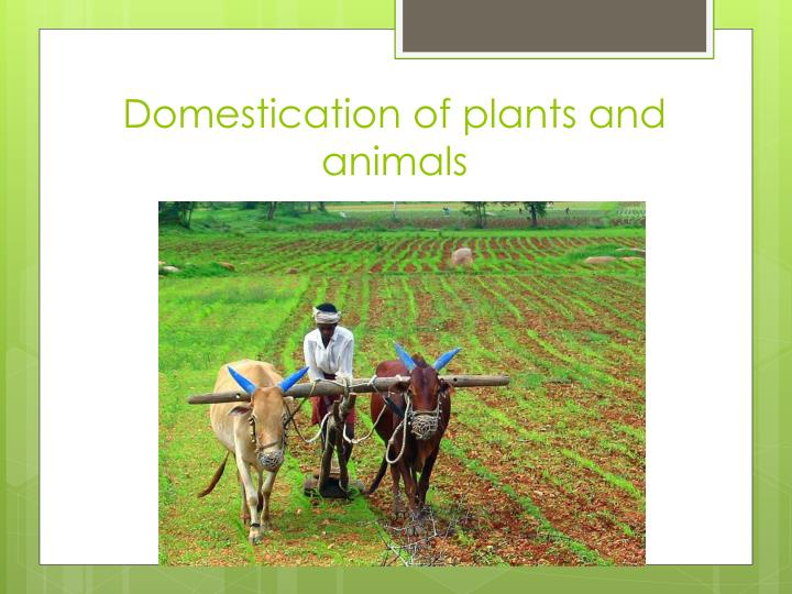 Domestication of plants and animals