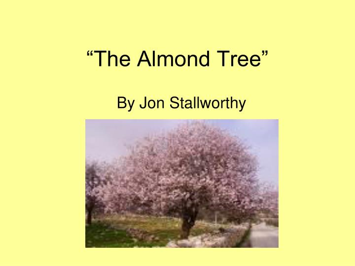 almond tree - john stallworthy essay Subject matter the almond tree tells the story of the birth of stallworthy's son the narrator is rushing to the hospital in the first few stanzas, and then parks beneath an almond tree coming into blossom.
