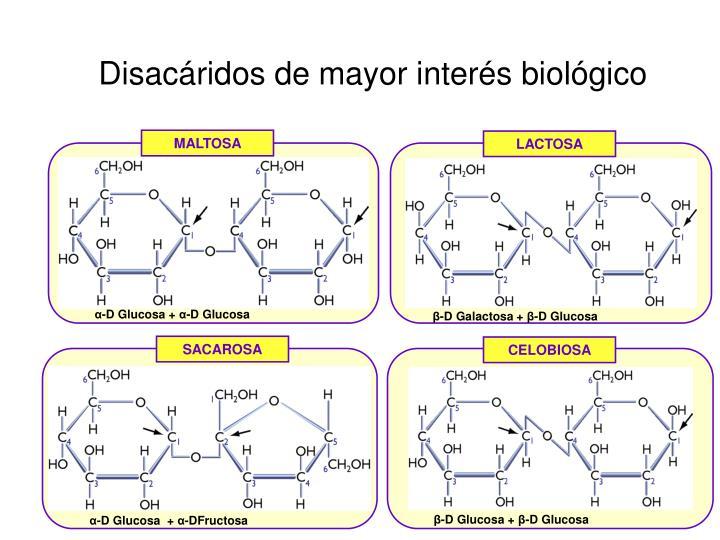 Disacáridos de mayor interés biológico
