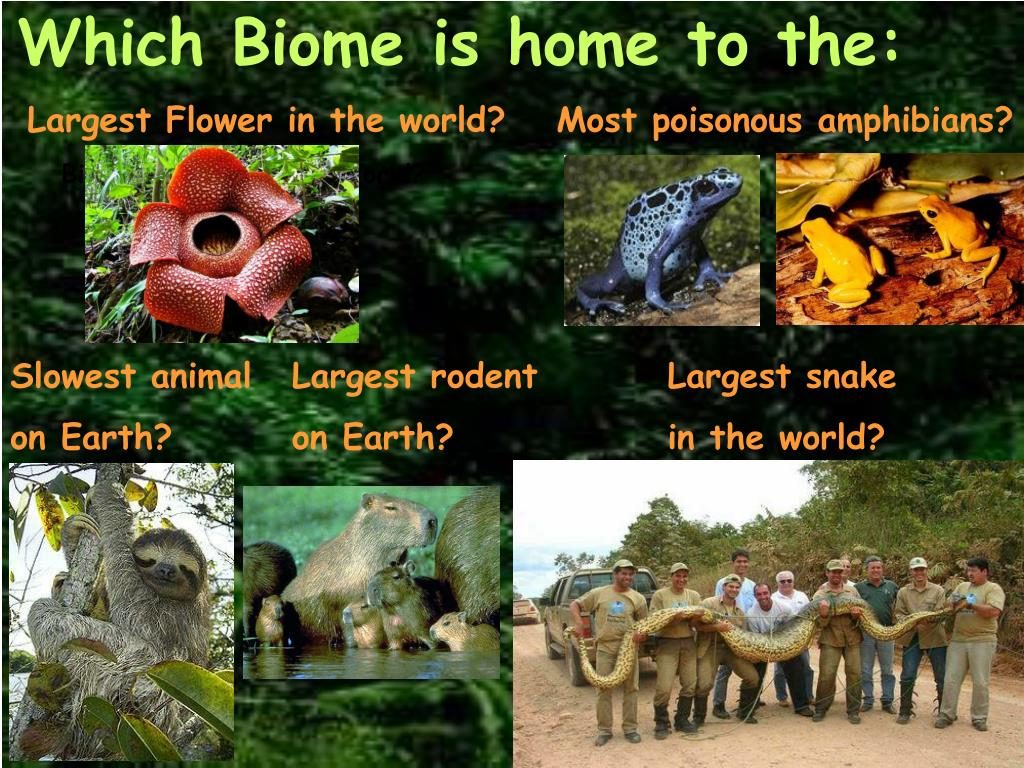 PPT - Which Biome is home to the: PowerPoint Presentation ...
