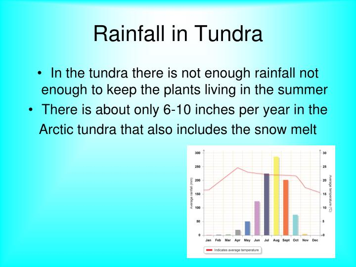 how much precipitation does the tundra get