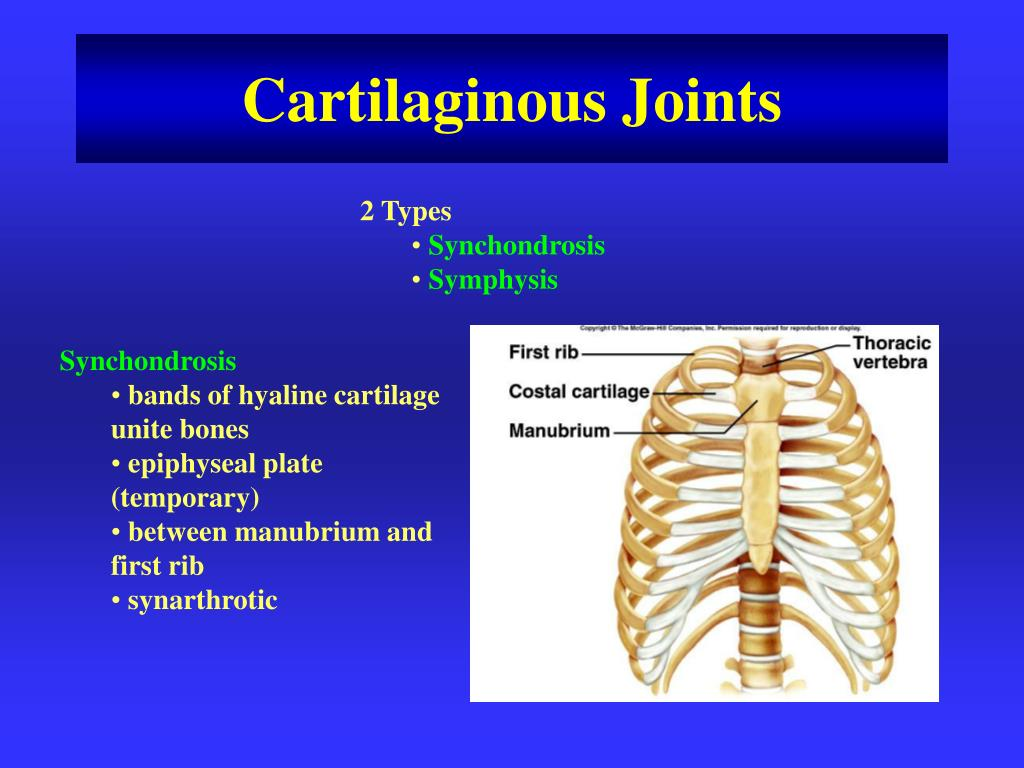 Types Of Synchondrosis / Synchondrosis where the connecting medium is hyaline cartilage, a cartilaginous joint is termed a synchondrosis.