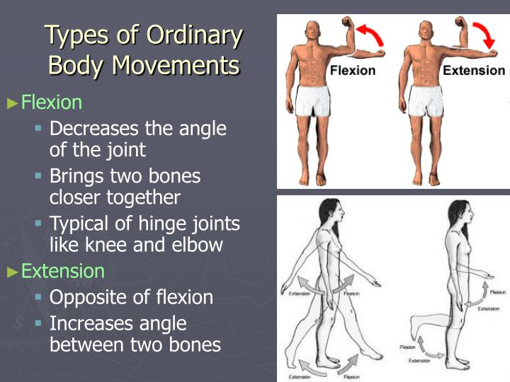 joints and body movement