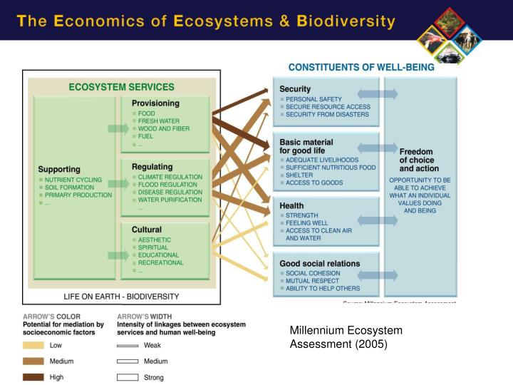 assessing ecosystem health essay Conceptually, the ecological framework is a broad, overarching paradigm or metatheory, bridging several fields of theory and research, and orienting practitioners and researchers to the importance of integrative, multilevel, and multidimensional approaches to person-environment relationships.