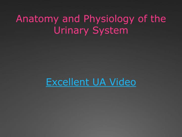 Anatomy and Physiology of the Urinary System