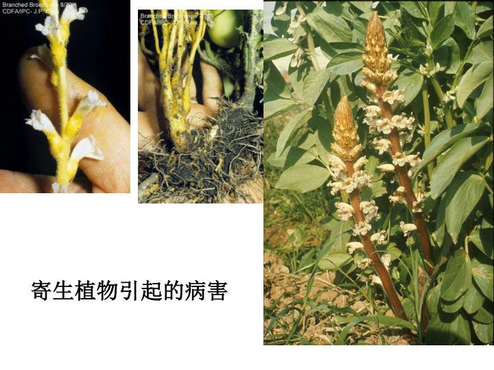 寄生植物引起的病害