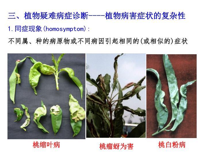 三、植物疑难病症诊断