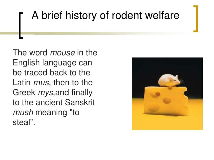 Ppt Biology And Anatomy Of Mouse Powerpoint Presentation Id5533658