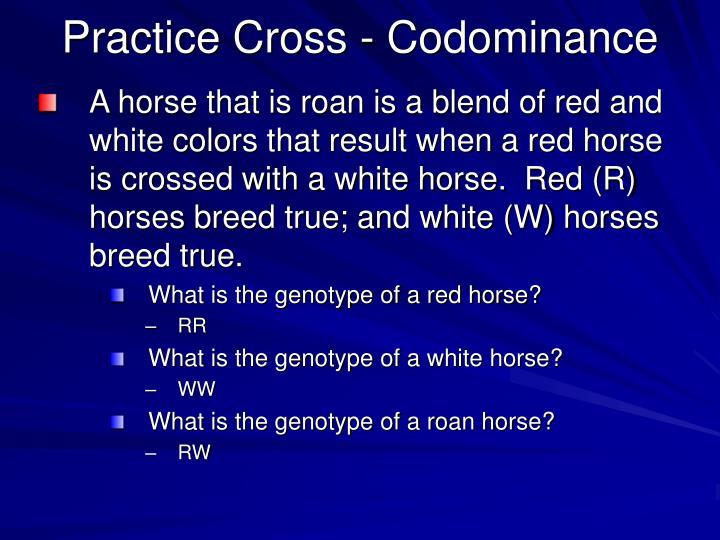 Practice Cross - Codominance