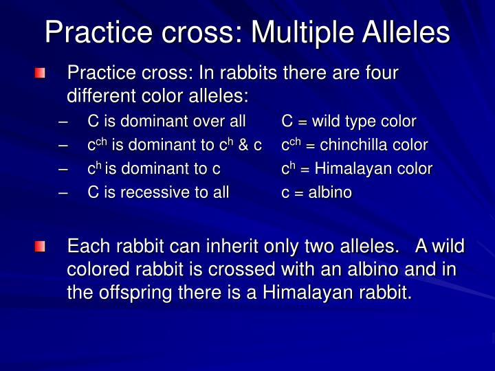 Practice cross: Multiple Alleles
