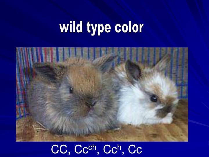 wild type color