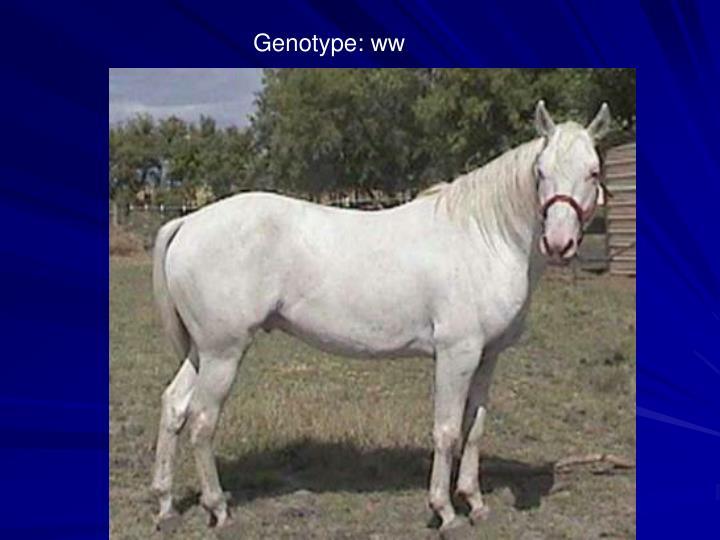Genotype: ww