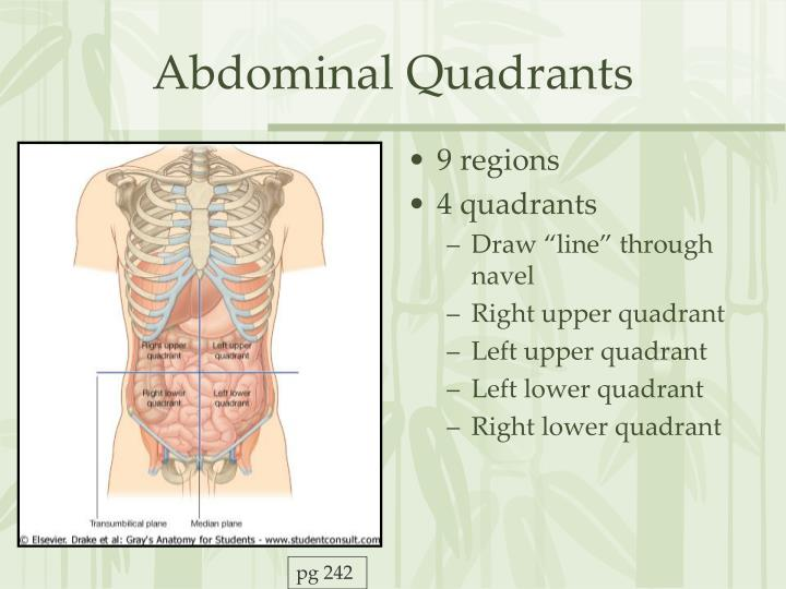 Ppt The Abdomen Powerpoint Presentation Id5535939