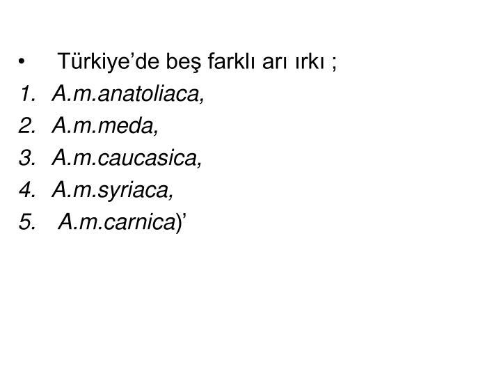 Türkiye'de beş farklı arı ırkı ;