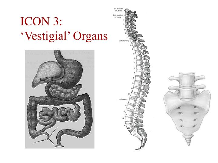 ICON 3: