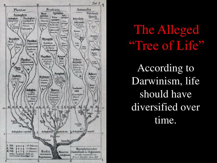 """The Alleged """"Tree of Life"""""""
