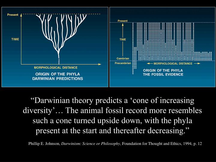 """""""Darwinian theory predicts a 'cone of increasing diversity'… The animal fossil record more resembles such a cone turned upside down, with the phyla present at the start and thereafter decreasing."""""""