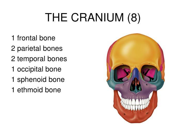 Ppt The Skull Powerpoint Presentation Id5537467