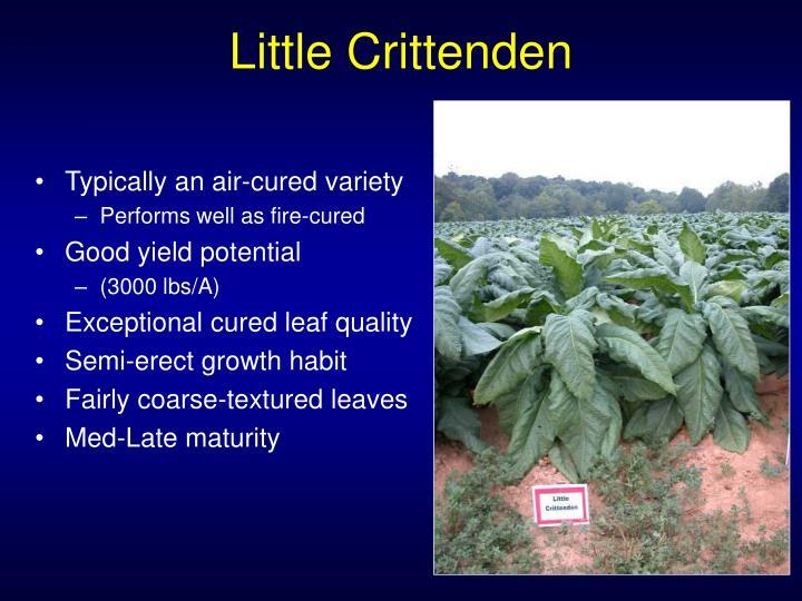 Little Crittenden