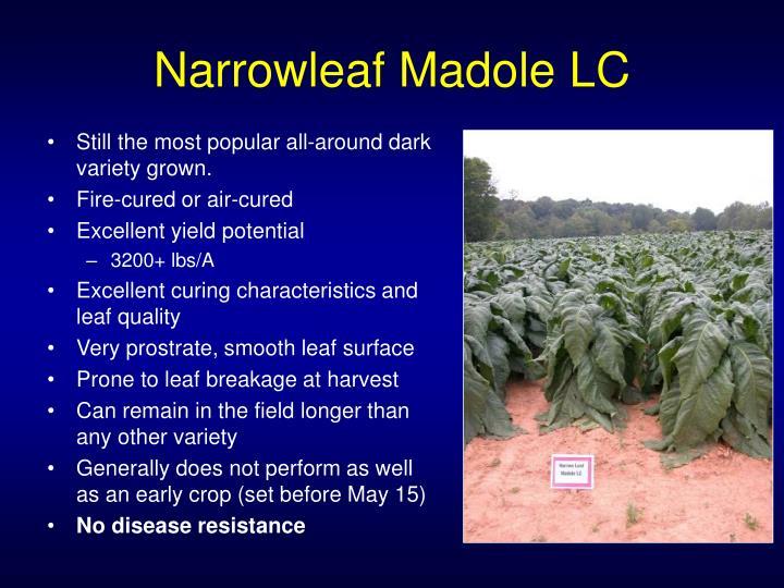 Narrowleaf Madole LC