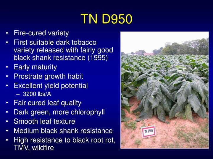 TN D950