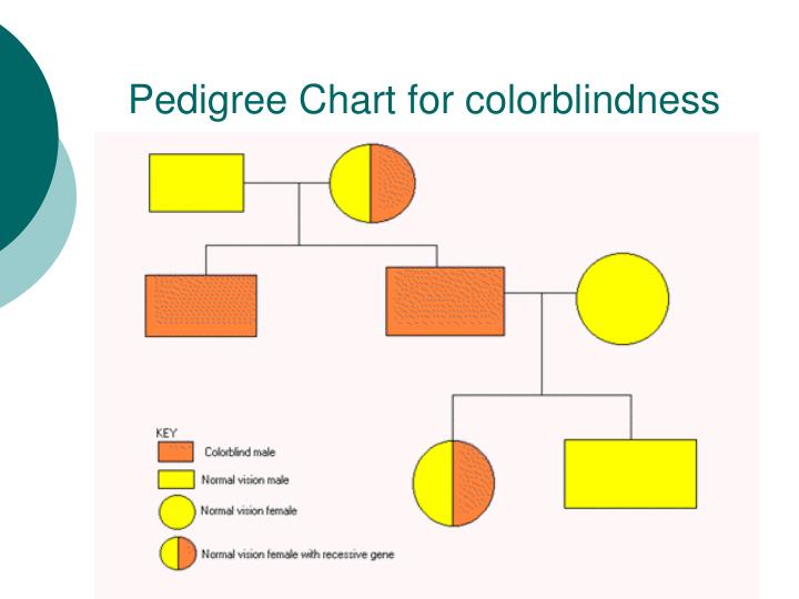 Ppt Patterns Of Heredity Human Genetics Powerpoint Presentation