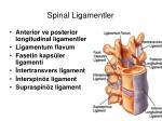 spinal ligamentler