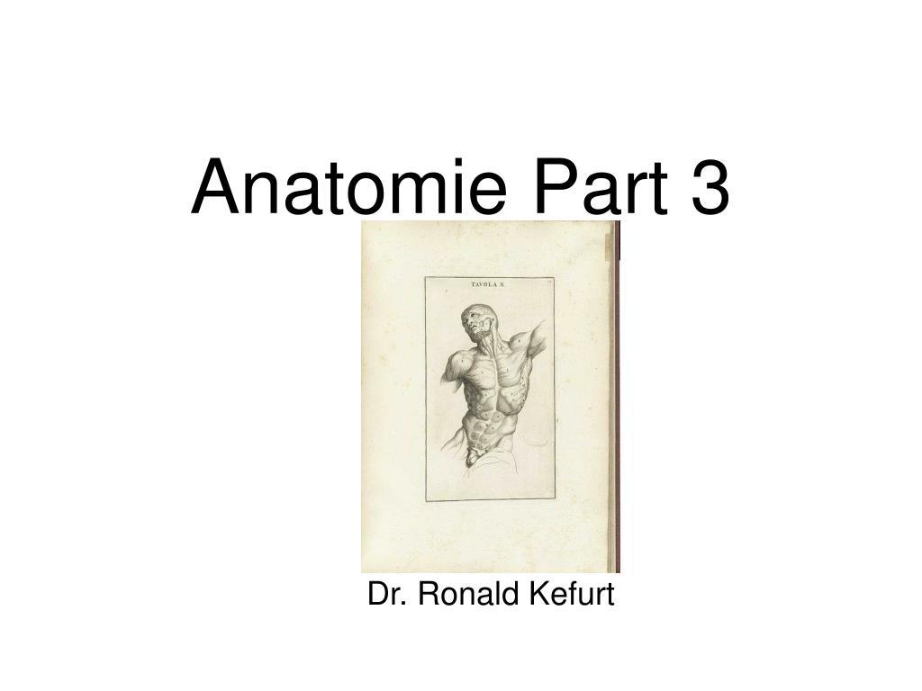 PPT - Anatomie Part 3 PowerPoint Presentation - ID:5540599
