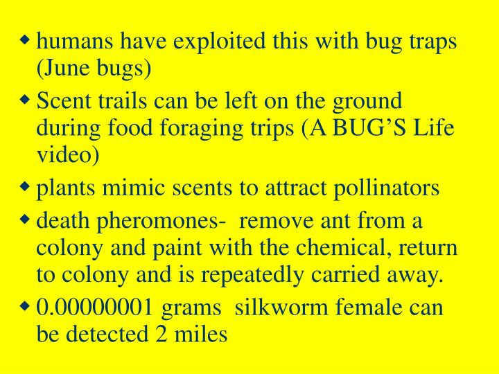humans have exploited this with bug traps  (June bugs)