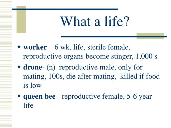 What a life?