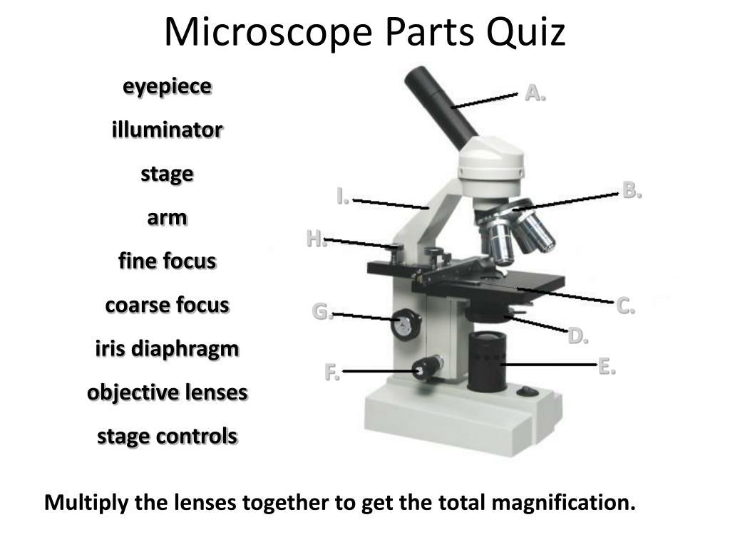 ppt - microscope parts quiz powerpoint presentation - id:5542911