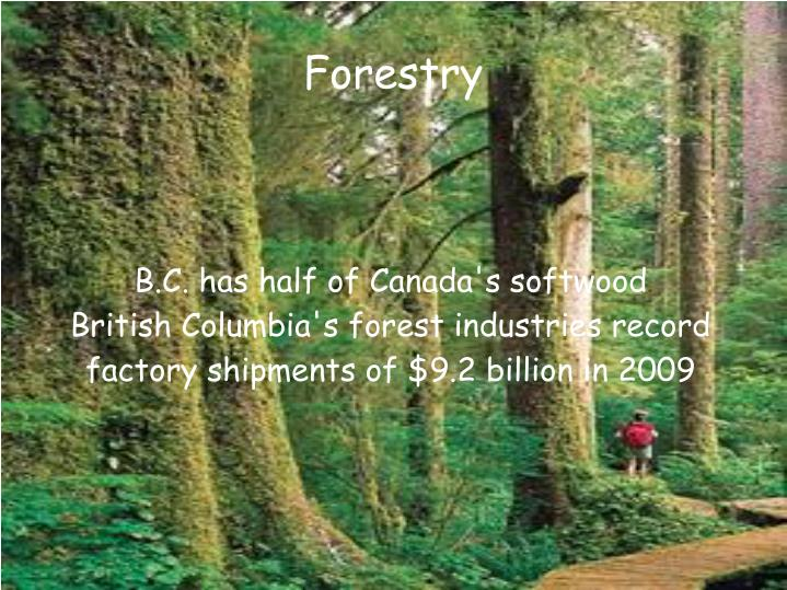 B.C. has half of Canada's softwood