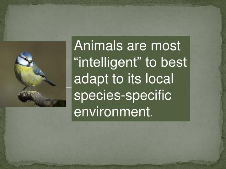 Animals are most