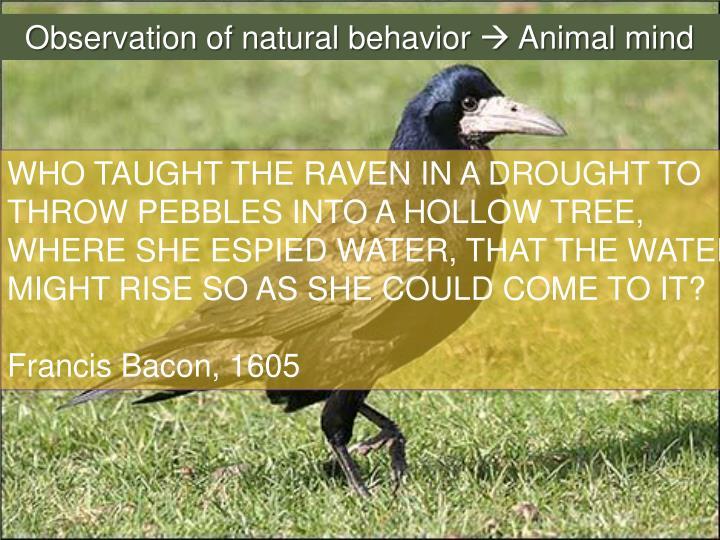 Observation of natural behavior