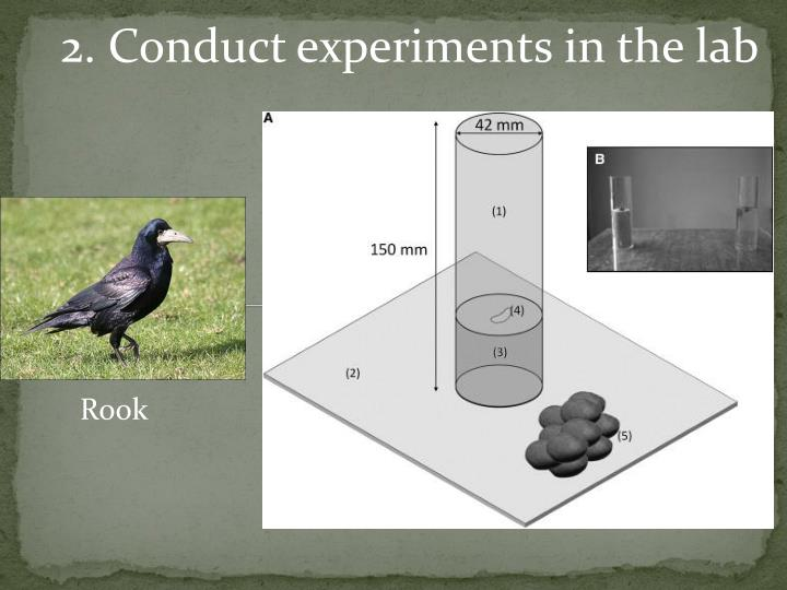 2. Conduct experiments in the lab