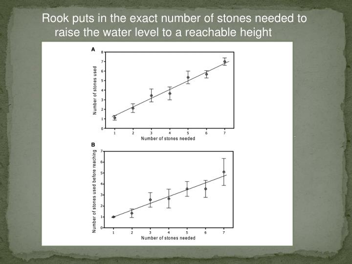 Rook puts in the exact number of stones needed to