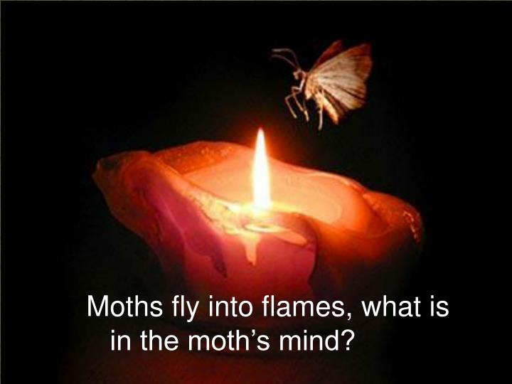 Moths fly into flames, what is
