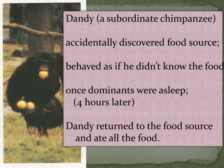 Dandy (a subordinate chimpanzee)