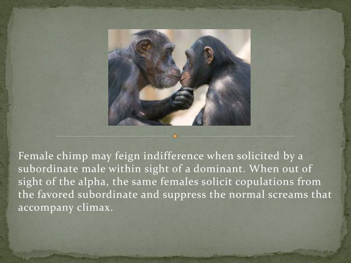 Female chimp may feign indifference when solicited by a subordinate male within sight of a dominant. When out of sight of the alpha, the same females solicit copulations from the favored subordinate and suppress the normal screams that accompany climax.