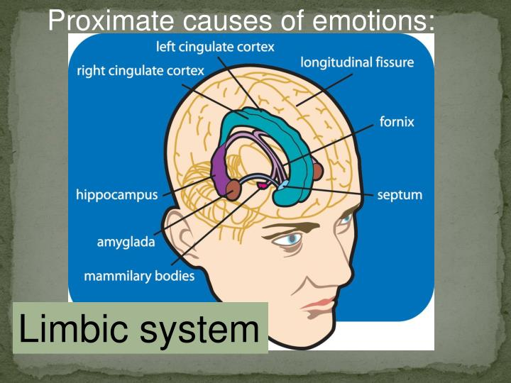 Proximate causes of emotions: