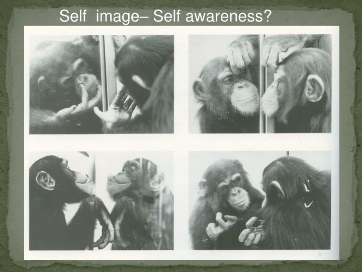 Self  image– Self awareness?