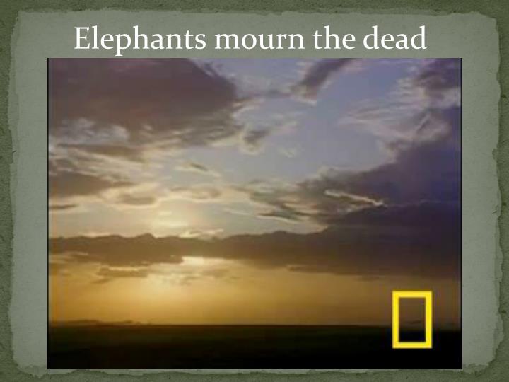 Elephants mourn the dead